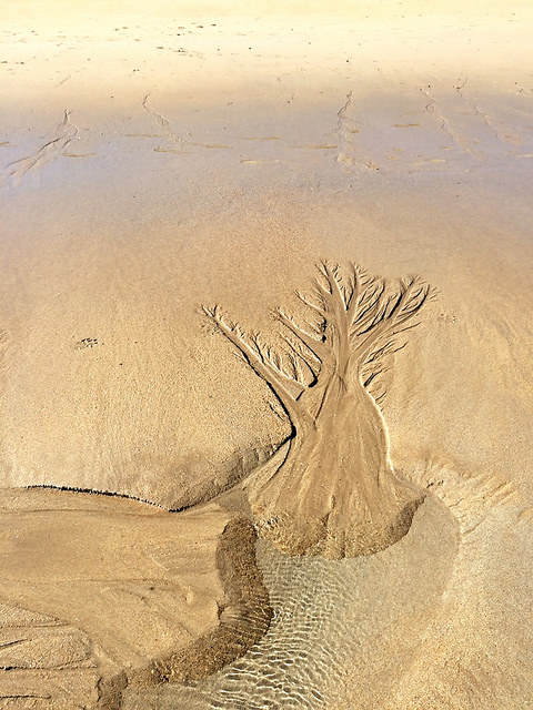 a sand tree, formed naturally by rivulets