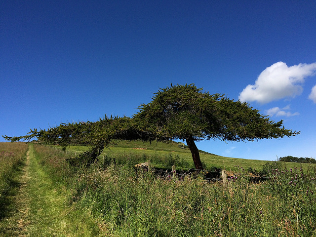 tree at Dunnydeer