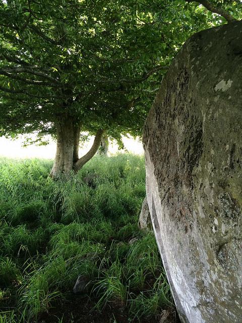 stone under tree